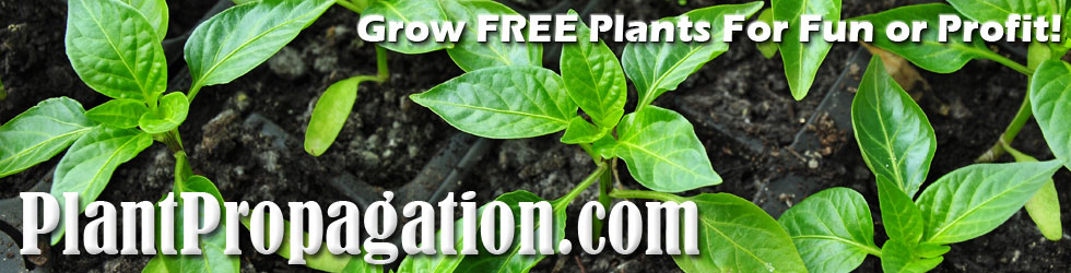 How to Propagate Plant Cuttings